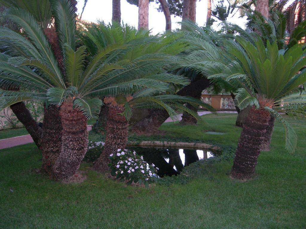 Benza laghetti da giardino cascate e ruscelli artificiali - Giardino con laghetto ...