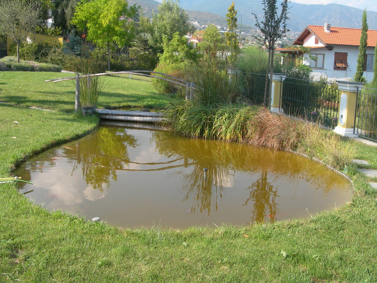 Benza laghetti da giardino cascate e ruscelli artificiali for Piante da laghetto ossigenanti