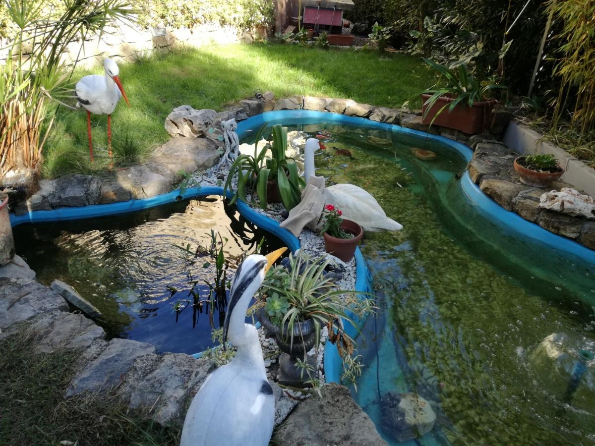 Benza laghetti da giardino cascate e ruscelli artificiali for Realizzazione laghetti artificiali quanto costa